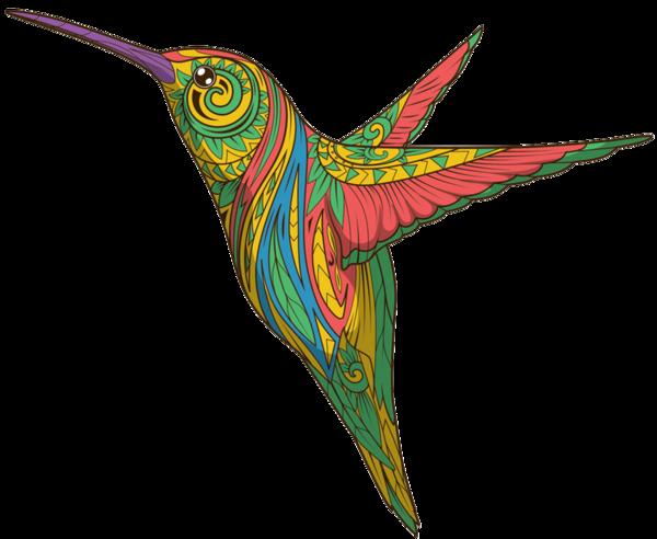 Пташка Колібрі, Узорна