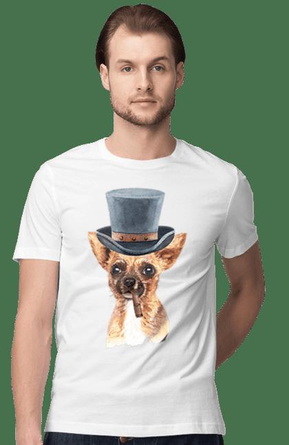 Собачка в капелюсі
